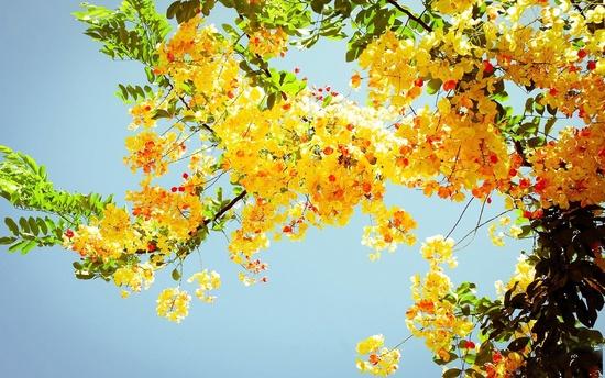 79520f7a53 Június színe ezúttal a sárga, pontosabban a citromsárga. Figyelmesen  olvassátok el a kihívás szövegét!