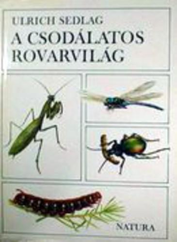 Image result for csodálatos rovarvilág