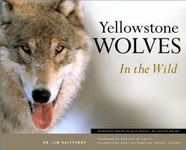 James C. Halfpenny: Yellowstone Wolves in the Wild